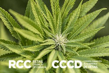 Aide-mémoire sur le cannabis : ce qui est légal et en quel lieu